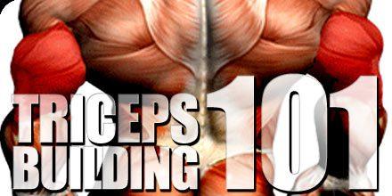 triceps building 101
